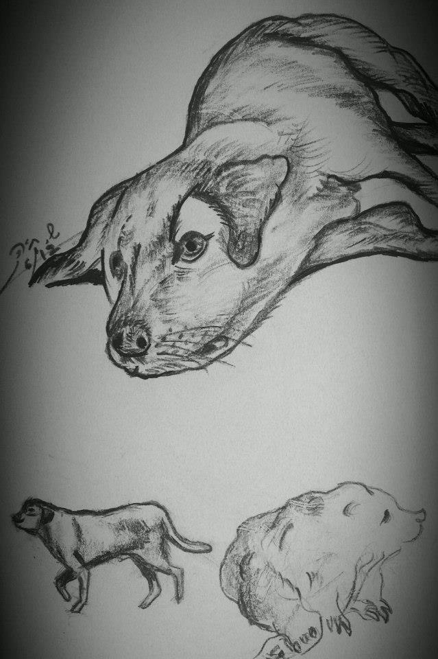 dog_drawing